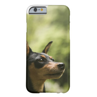Miniature Pinscher (Min-Pin) 2 Barely There iPhone 6 Case
