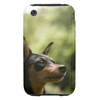 Miniature Pinscher (Min-Pin) 2 iPhone 3 Tough Covers