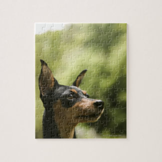 Miniature Pinscher (Min-Pin) 2 Jigsaw Puzzle