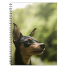Miniature Pinscher (Min-Pin) 2 Notebook