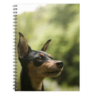 Miniature Pinscher (Min-Pin) 2 Notebook