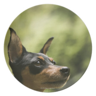 Miniature Pinscher (Min-Pin) 2 Plate