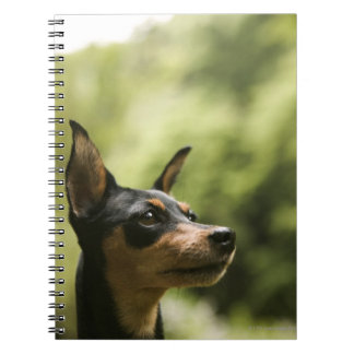 Miniature Pinscher (Min-Pin) 2 Spiral Notebook