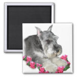 Miniature Schnauzer Art Gifts Square Magnet