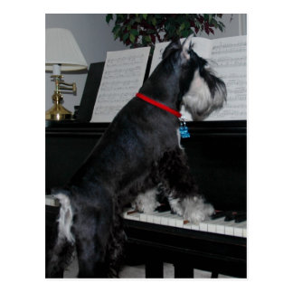 Miniature Schnauzer at the piano Postcard