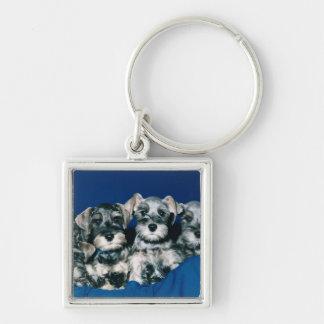 Miniature Schnauzer Puppies Key Ring