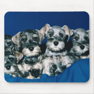 Miniature Schnauzer Puppies Mouse Pad
