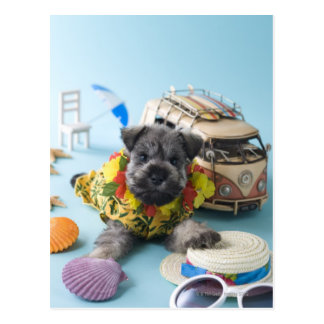 Miniature Schnauzer Puppy and Summer Vacation Postcard