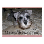 Miniature Schnauzer Puppy Postcards