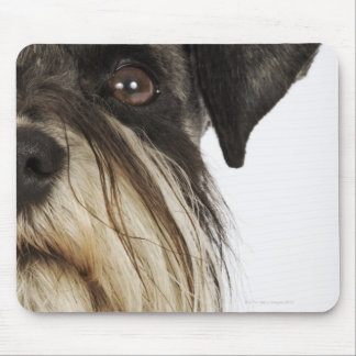 Miniature Schnauzer, studio shot, close-up Mouse Mat