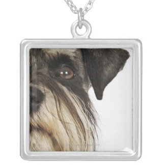 Miniature Schnauzer, studio shot, close-up Silver Plated Necklace