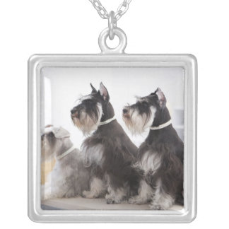Miniature Schnauzers sitting at edge of table Silver Plated Necklace