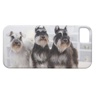 Miniature Schnauzers standing at edge of table iPhone 5 Covers