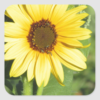 Miniature Wild Sunflower Bloom Square Stickers