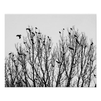 Minimalist Black and White Photo of Birds in Trees Poster