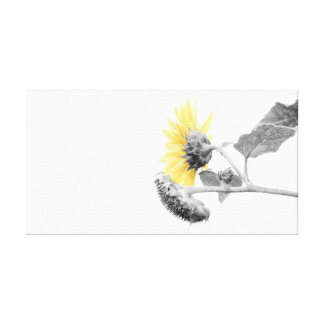 Minimalist Yellow Sunflower Selective Coloring Canvas Print