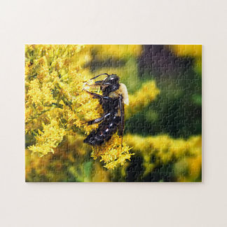 Mining Bee on Goldenrod Puzzle