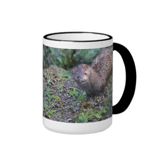 Mink Photo Closeup Mugs