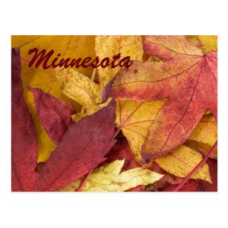 Minnesota Autumn Leaves Postcard