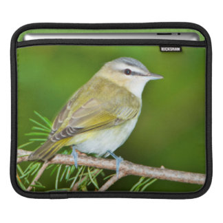 Minnesota, Mendota Heights 1 iPad Sleeve