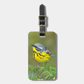 Minnesota, Mendota Heights, Magnolia Warbler 1 Luggage Tag