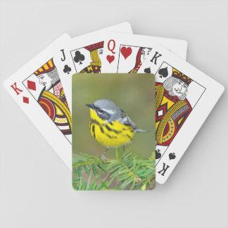 Minnesota, Mendota Heights, Magnolia Warbler 1 Playing Cards