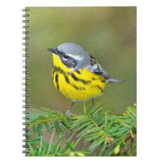 Minnesota, Mendota Heights, Magnolia Warbler 1 Spiral Notebook