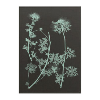 Mint & Charcoal Nature Study IV Acrylic Print