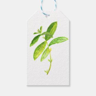 Mint herb Mint watercolour Mint print