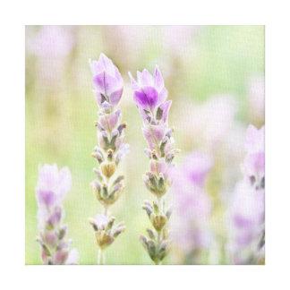 Minty Lavender - Dreamy Purple Mint Bedroom Decor Stretched Canvas Print