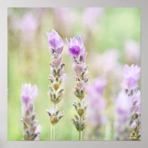 Minty Lavender - Dreamy Purple Mint Bedroom Decor Posters