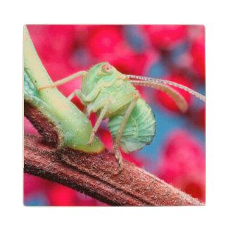 Minute Bug On Branch. Kruger National Park Wood Coaster