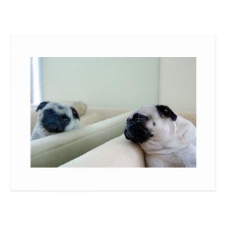 Mirror Pugs Postcard