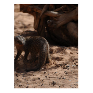 Miscellaneous - Banded Mongoose Pattern Postcard