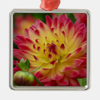 Miscellaneous - Dahlias Patterns Forty-Nine Silver-Colored Square Decoration