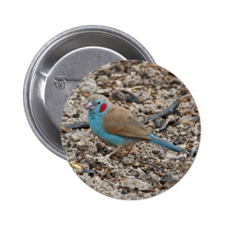 Miscellaneous - Red-Cheeked Pattern Cordon-bleu co 6 Cm Round Badge