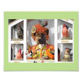 Misha in the Hen House Card Photo Print