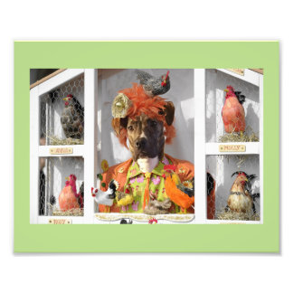Misha in the Hen House Card Photographic Print
