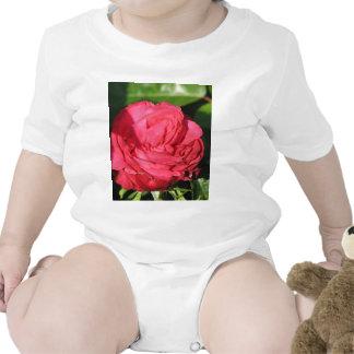 Miss All-American Beauty Hybrid Tea Rose 097 Tshirt