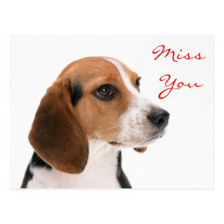 Miss You Beagle Puppy Dog Greeting Postcard