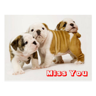 Miss You Bulldog Puppy Dog Greeting Postcard