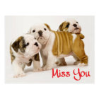 Miss You English Bulldog Puppy Dog Postcard
