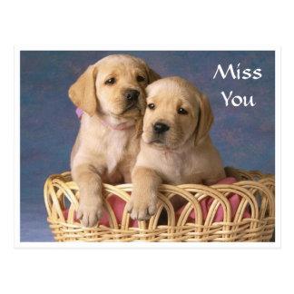 Miss  You Labrador Retriever Puppy  Post Card