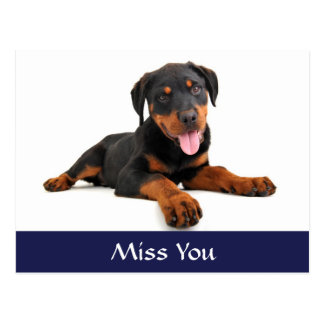 Miss You Rottweiler Puppy Dog Greeting Postcard