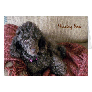 Missing You, Betty the Brown Poodle on Blanket Greeting Card
