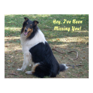 Missing You- Collie! Postcard