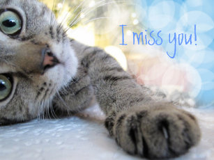 Cat Miss You Cards Zazzle Uk