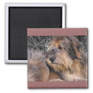 Missing You Dog Square Magnet