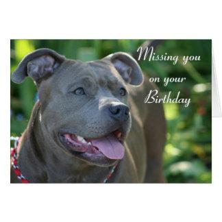 Image result for birthday pitbull