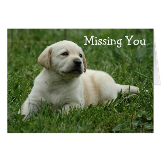 Missing You Yellow Labrador Retriever Puppy Card